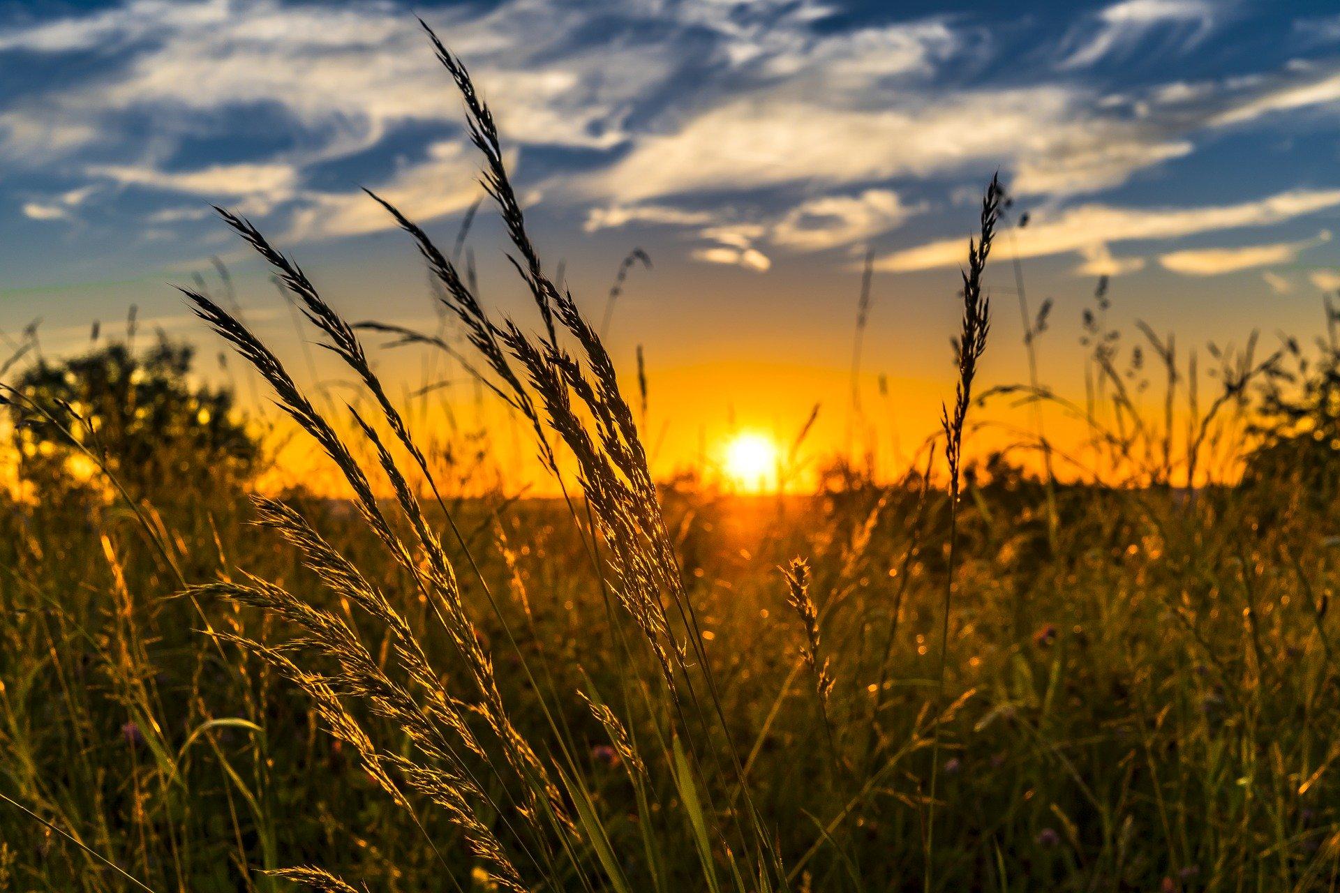 インフラエンジニア必見!5Gで変化する分野:農業編のアイキャッチイメージ
